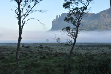 Hoezo, de Tasmaanse tijger is uitgestorven? Wat heb ik dan gisteren in de bush gezien?